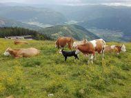 Landwirtschaft_Unternberg